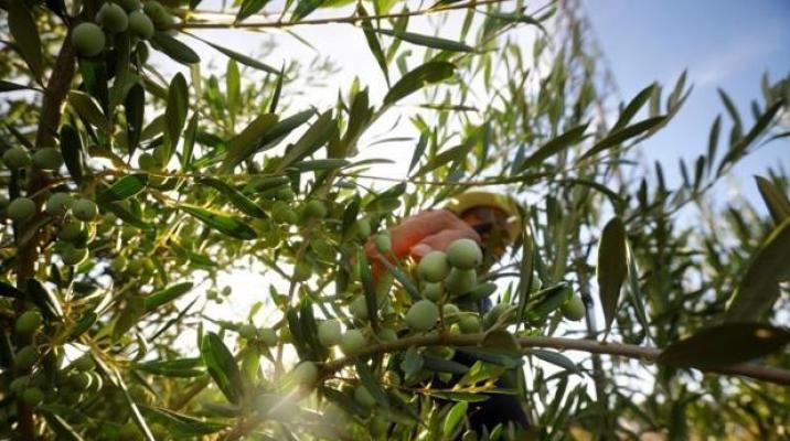 Consumo accede a sacar el aceite de oliva del etiquetado Nutriscore tras las quejas del sector